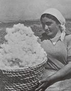 綿畑の女性